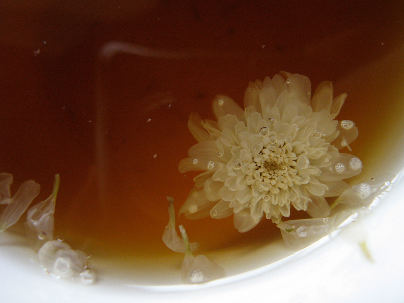 Tea of Chrysanthemum