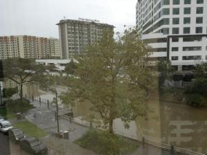 rehabilitated river