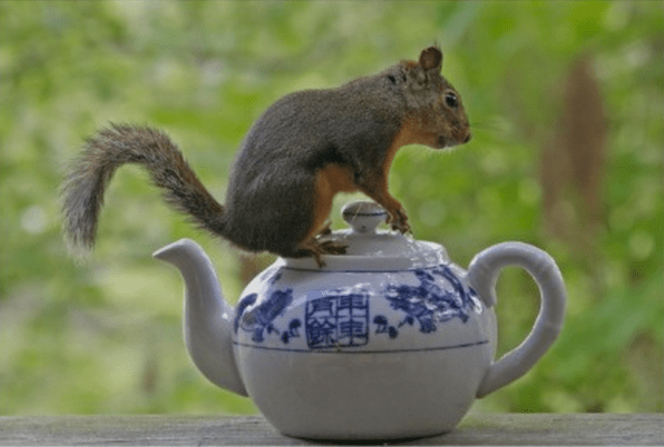 Squirrel on Teapot -funnaturephotography