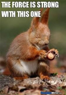 jedi-squirrel-star-wars-force-funny