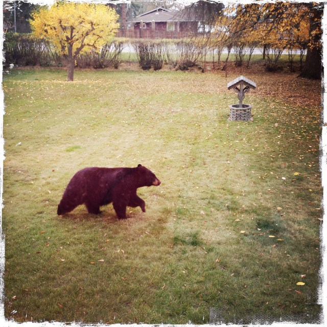 You know, I only put the word hibernation in the text so I could post this picture of a bear in my aunt's front yard.
