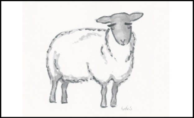 Bridget Sheep Drawing