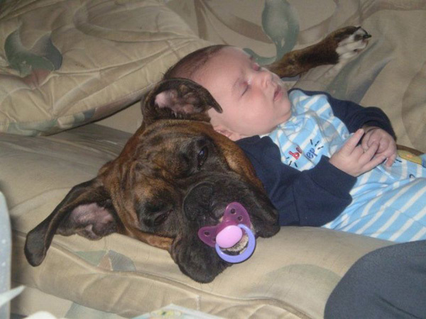 new dog, family, baby, toddler, love, dogs