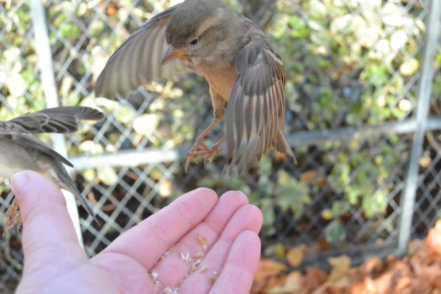 Bird hovers above Myranda's hand for a magical moment in Europe.