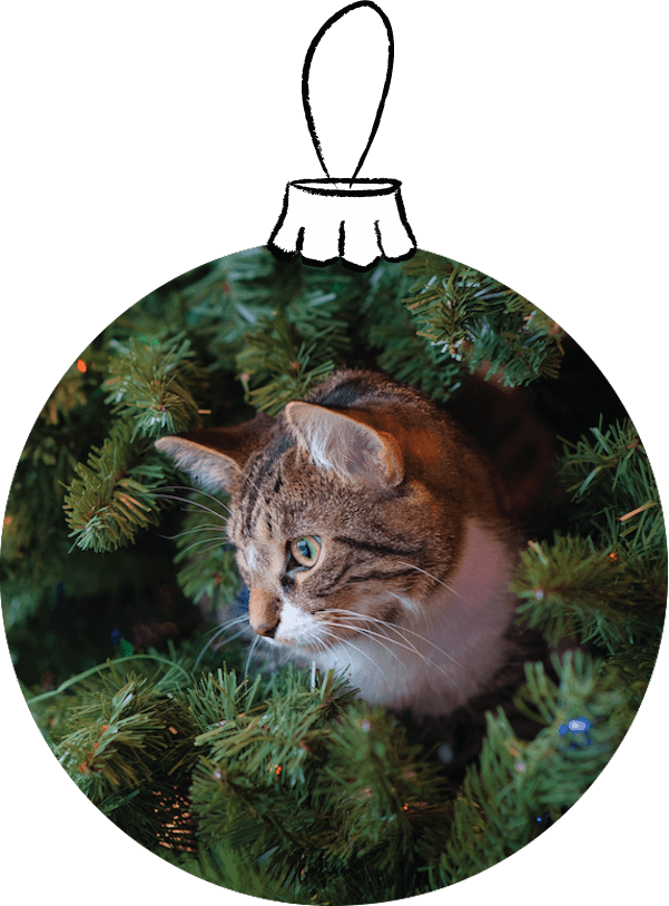 Christmas ornament with a cat in the Christmas tree branches