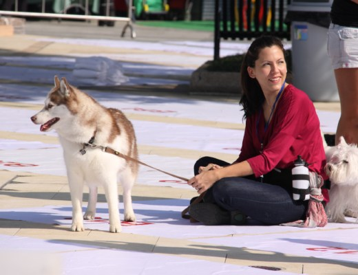 Jessie and Bridget at the World Record Dog Training Day