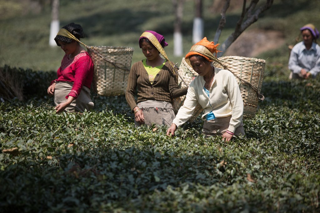 Chapter 3 Historical Development of Chinese & Indian Tea Industries