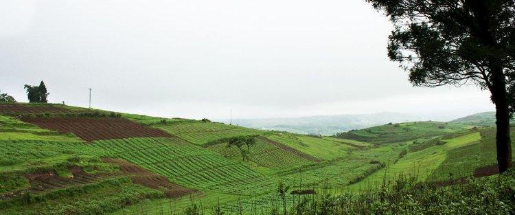 Meghalaya: Tea for a new economy