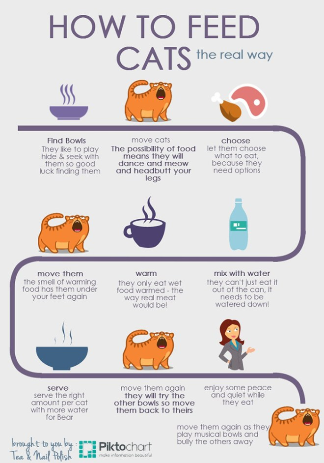 How To Feed Cats Infographic