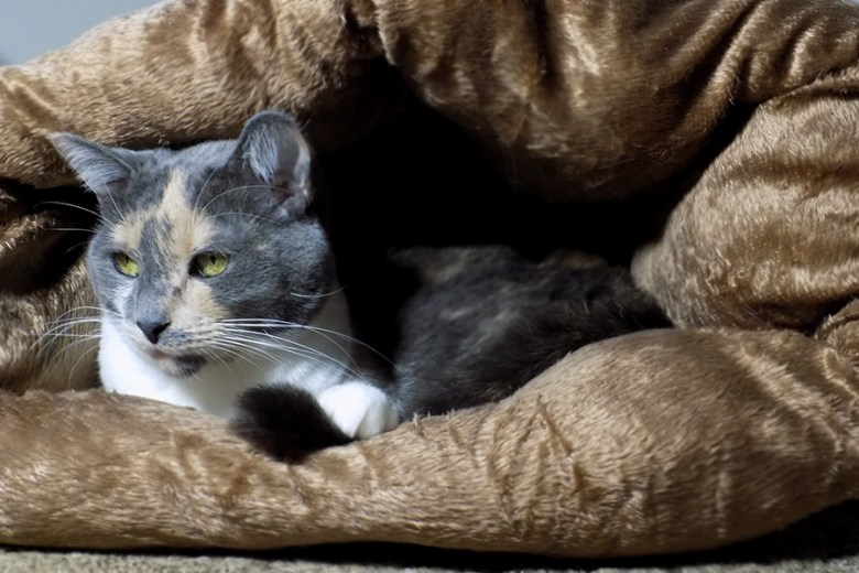 Avon Canada Plush Pet Bed Christmas 2016 Holiday Gift Guide For Pets - Izzy using bed