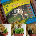 Jiffy Cat Grass Kit Review
