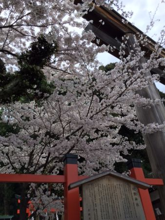 The Top 4 Best Places to View Sakura in Nishijin That Only Kyoto Locals Know About