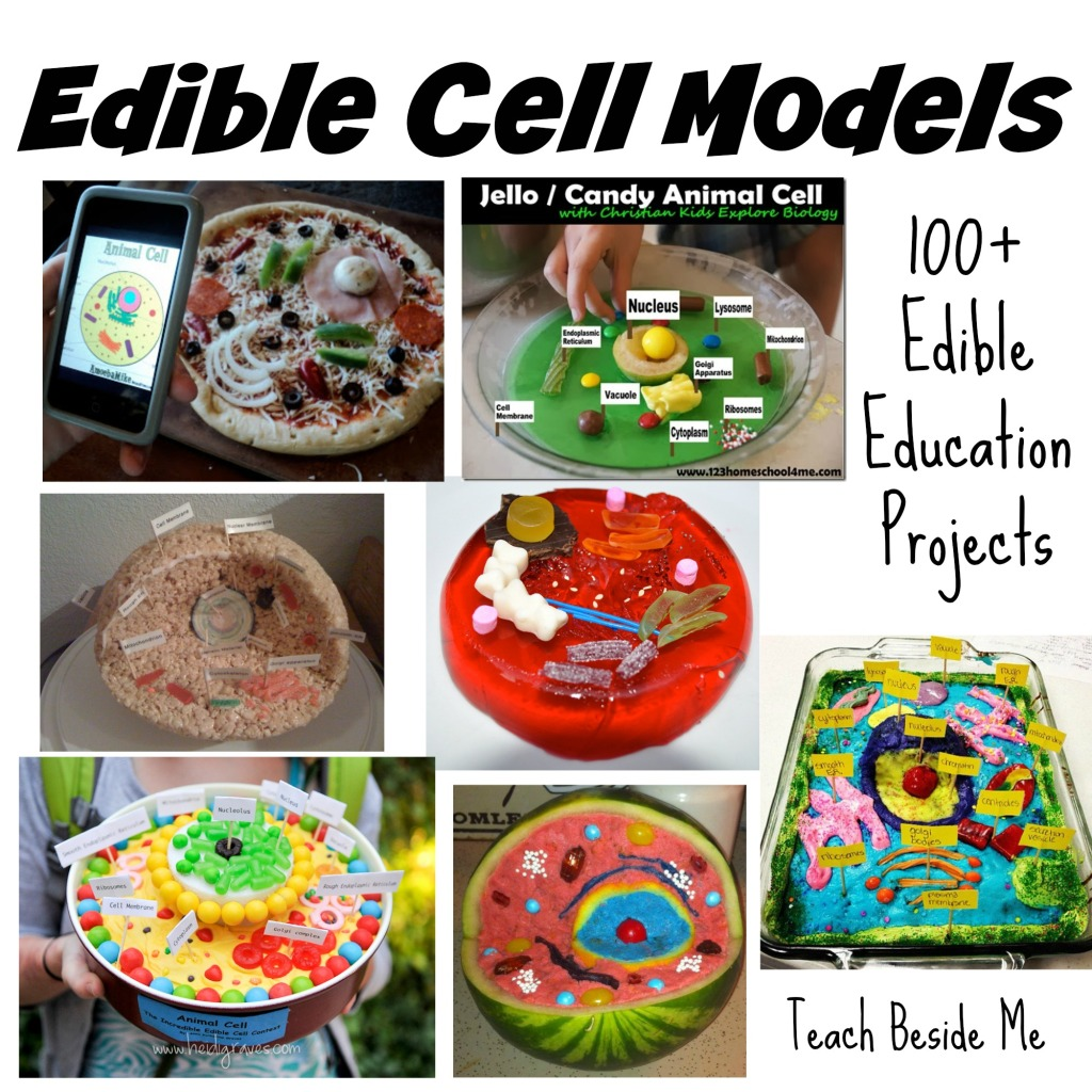 Candy Cell Diagram Wire Diagrams Model Animal And Plant 4k Pictures Full Hq