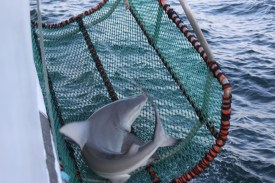 Photo: Matt Ellis/NOAA Fisheries