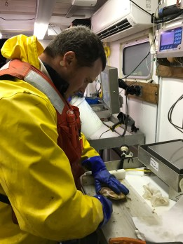 """I was able to be the """"cutter"""" in the lab and shuck the scallops to be prepared for weighing and preserving."""