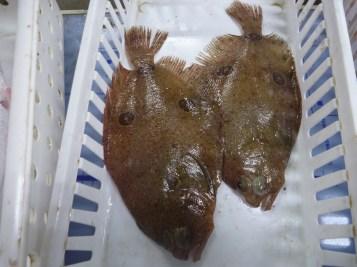 Three Spot Flounder
