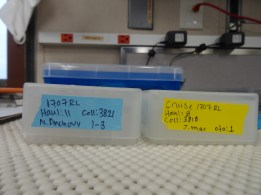 Otoliths are cataloged and sent for evaluation