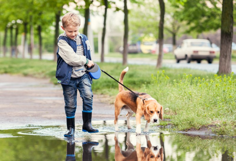 How To Teach A Dog To Walk With You