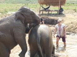 Happy Elephant Home- happy little eley's!