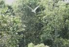 Tra Su birds