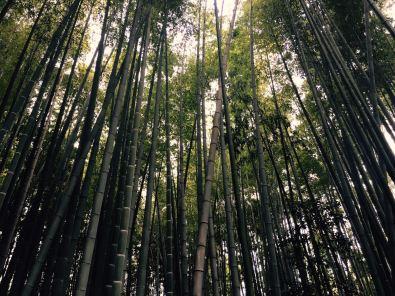 Bamboo forest, Kamakura