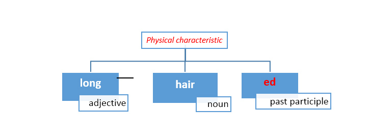 Use adj+noun+ed to describe a physical or a mental characteristic of humans, animals or objects