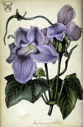 Human Consumption_Botany 2 crop
