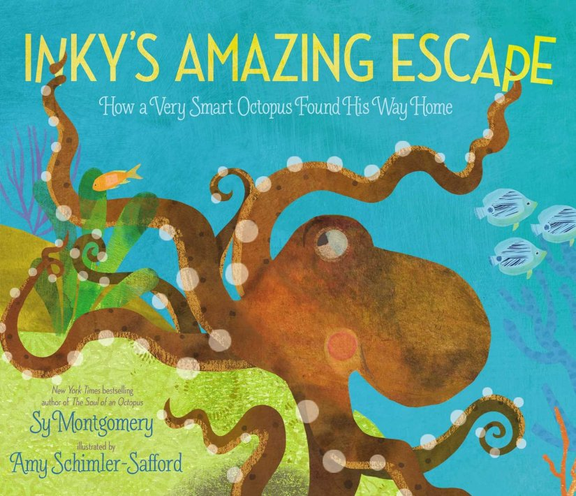 Inky's Amazing Escape by Sy Montgomery illustrated by Amy Shimler-Saford