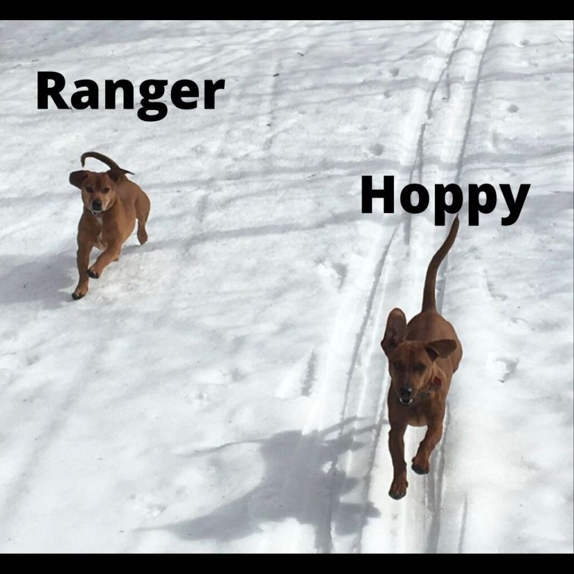 Writing Camp with Hoppy and Ranger: Session 7