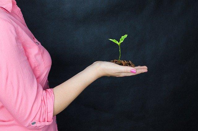 Plantemos 10 millones de árboles nativos