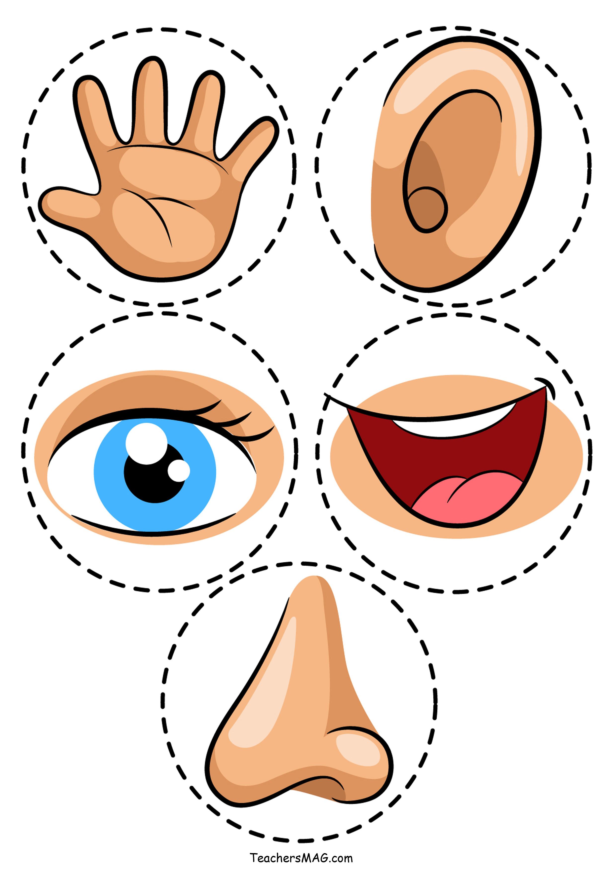 Five Senses Activity For Preschool Students