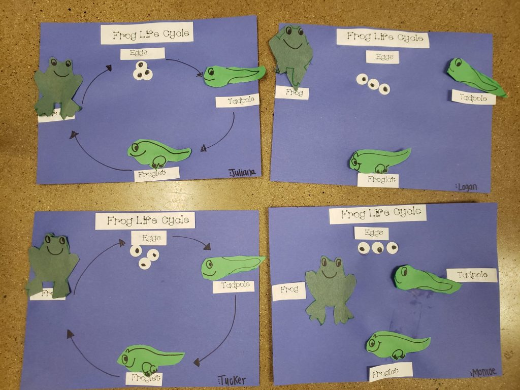 Worksheets And A Poster About The Frog Life Cycle For