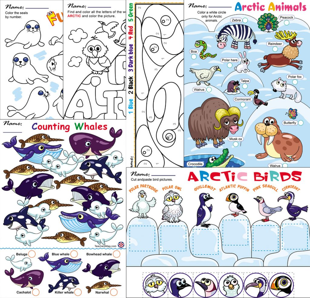 Arctic Animals Worksheets For Preschoolers