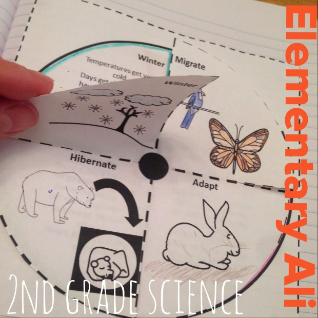 interactive notebook activity