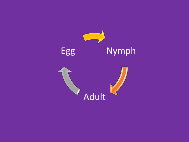 incomplete cycle