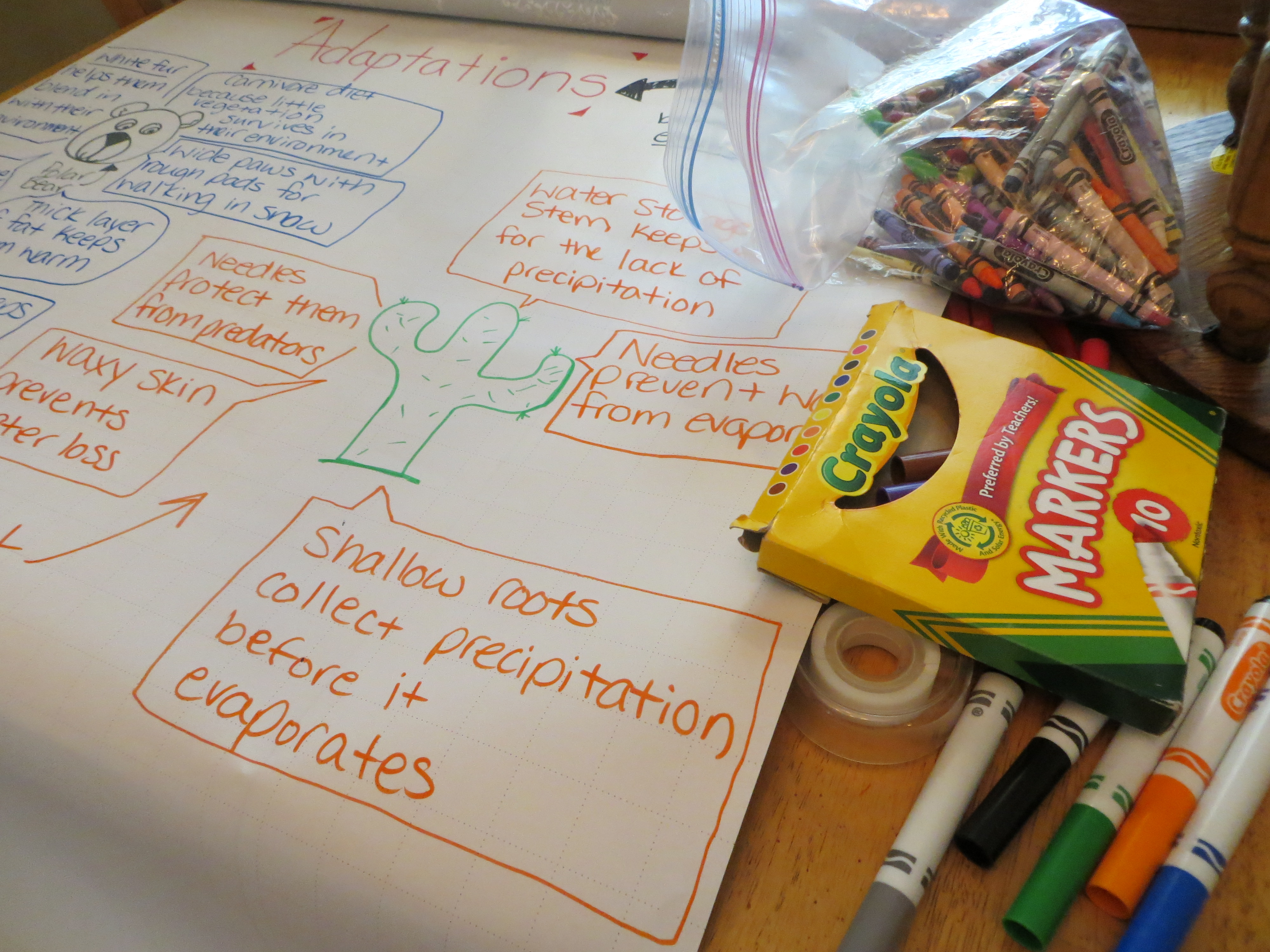 Week Twenty Six Science Lessons Plant Adaptations And