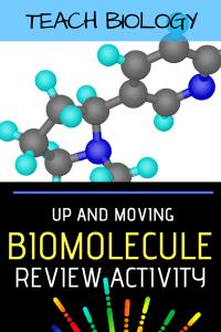 Biomolecule Review Activity