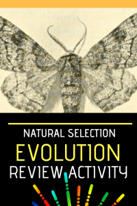 Natural Selection Review Activity