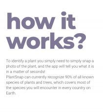 AI Examples – Plant Snap