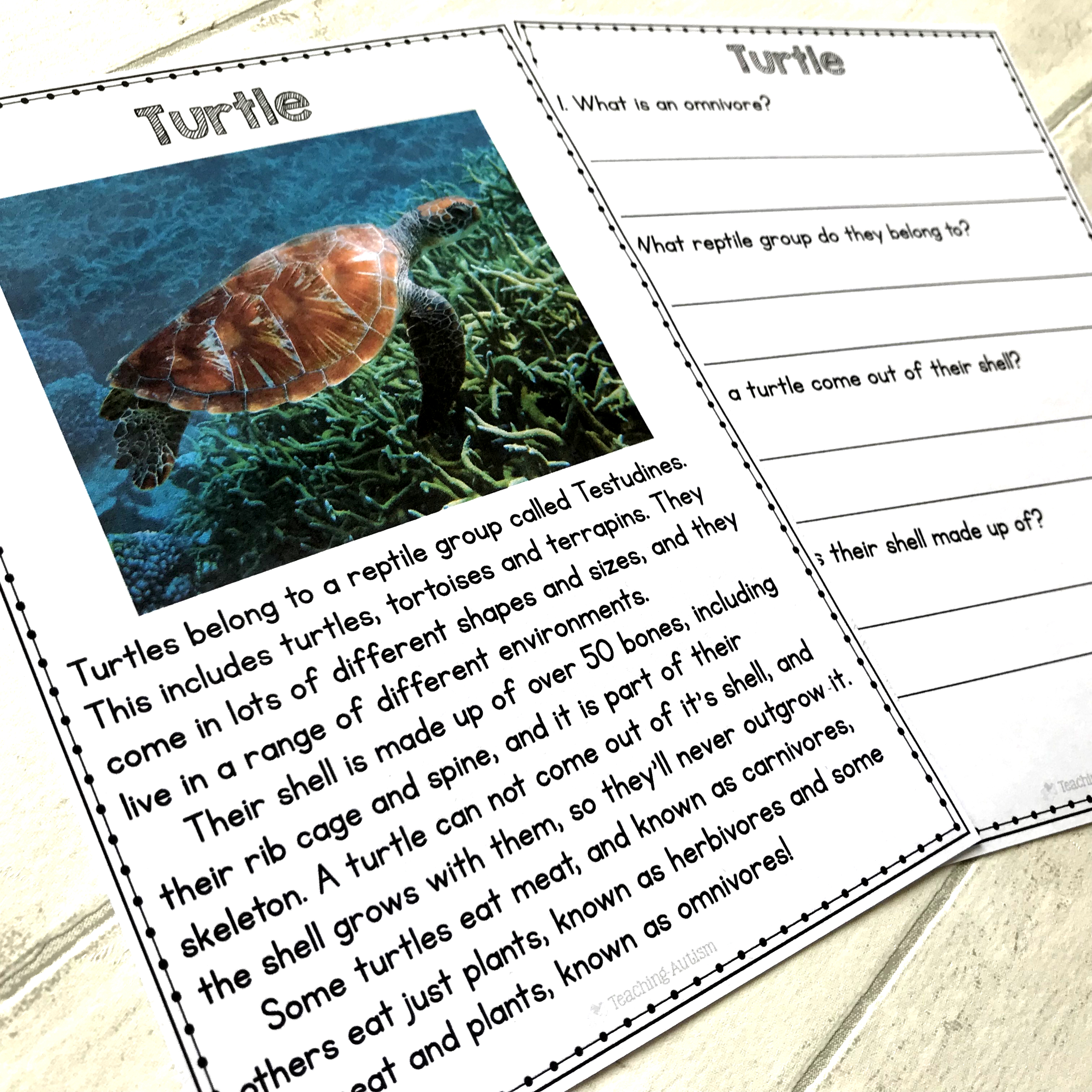 Animal Facts Reading Comprehension Worksheets