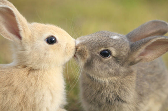 Sweet Valentine's Day Gifts from nature (14)