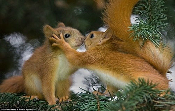 Sweet Valentine's Day Gifts from nature (15)