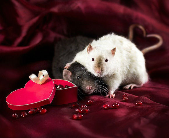 Sweet Valentine's Day Gifts from nature 2017