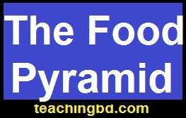 TheFoodPyramid