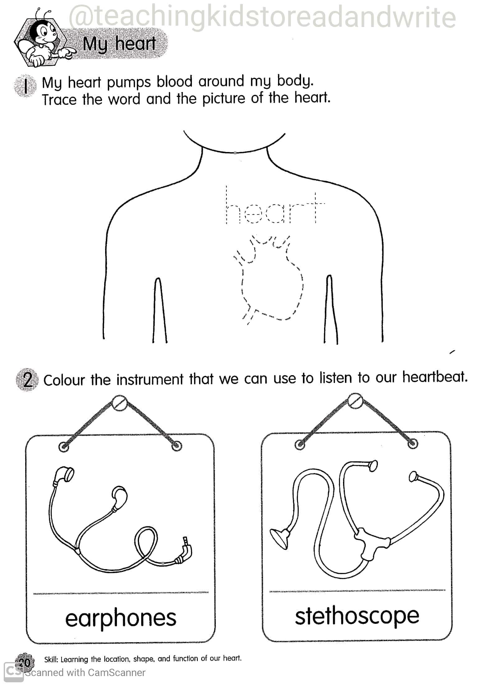 Science Worksheets For Kindergarten