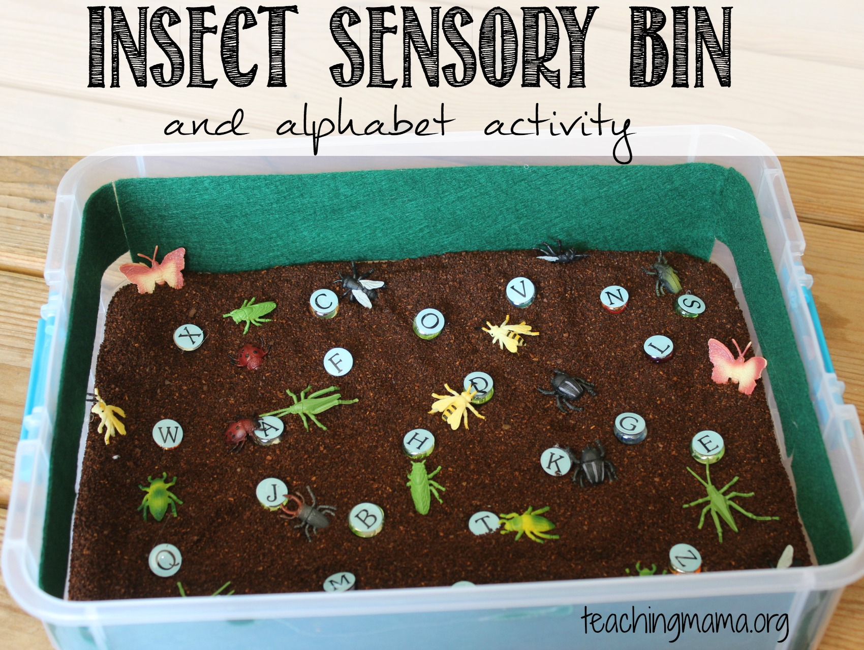 Insect Sensory Bin And Alphabet Activity