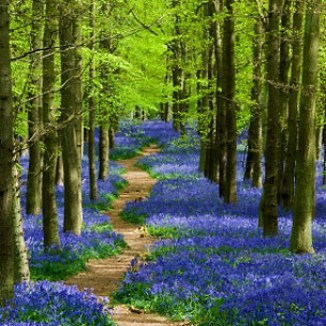 wooded-path