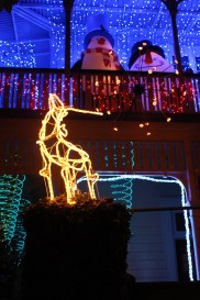 Christmas lights in Auckland