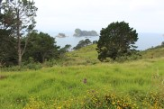 On the hike to Cathedral Cove