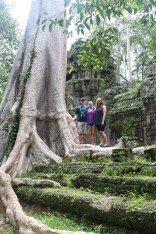 Massive trees covering the temple
